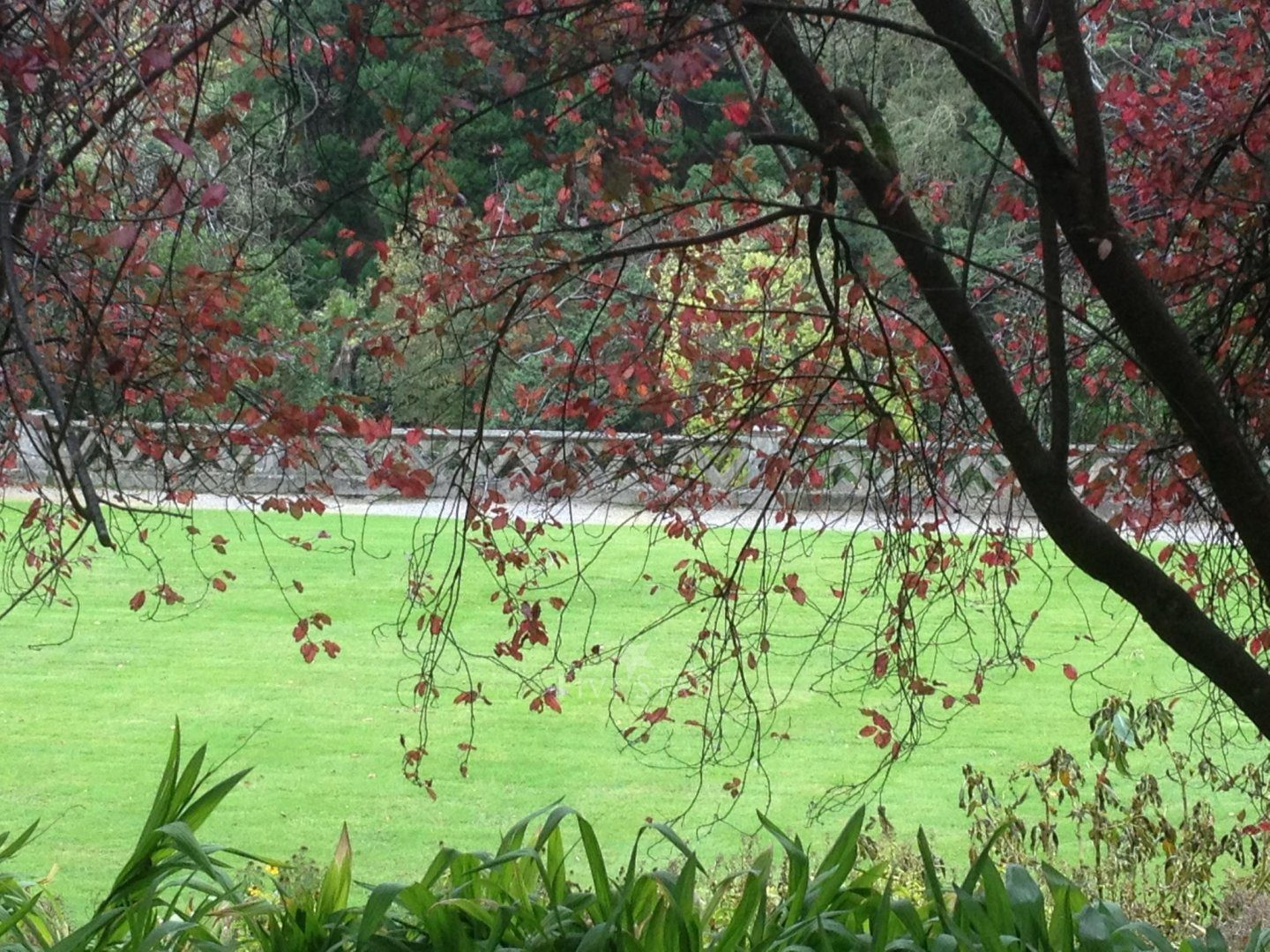 Lisselan Estate photo 11