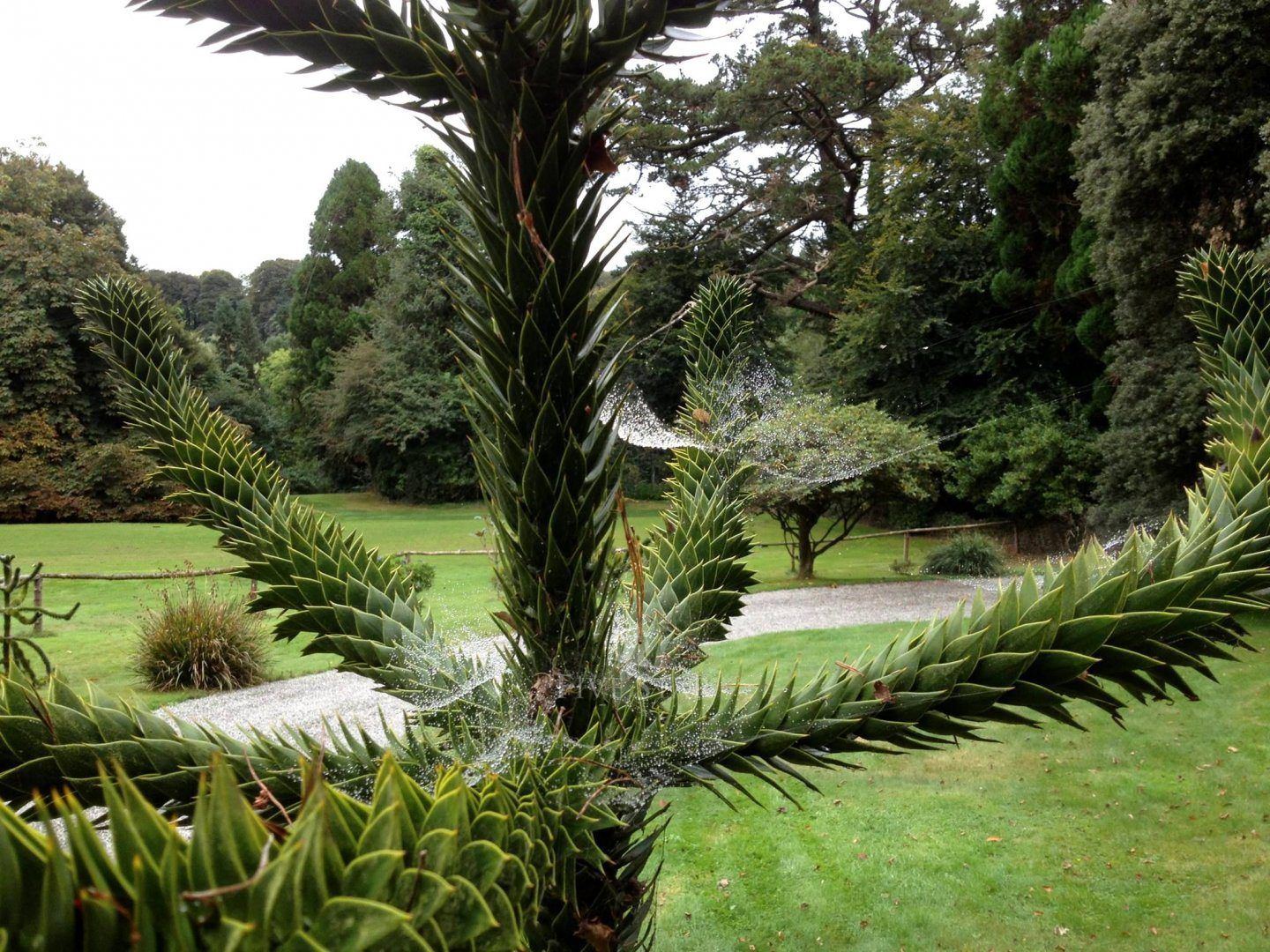 Lisselan Estate photo 13