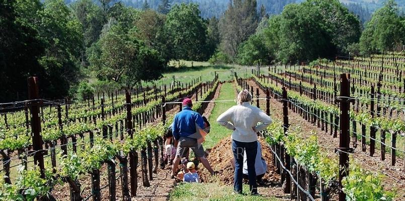 The Vineyard photo 17