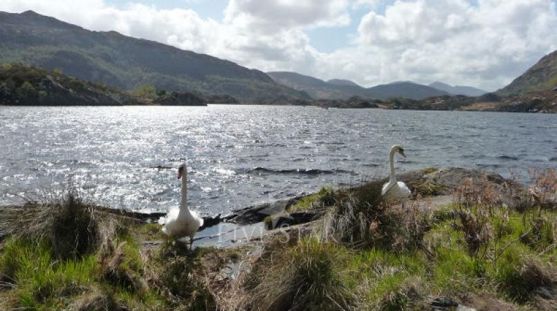 Muckross Lakeside Holiday Village Killarney photo 3