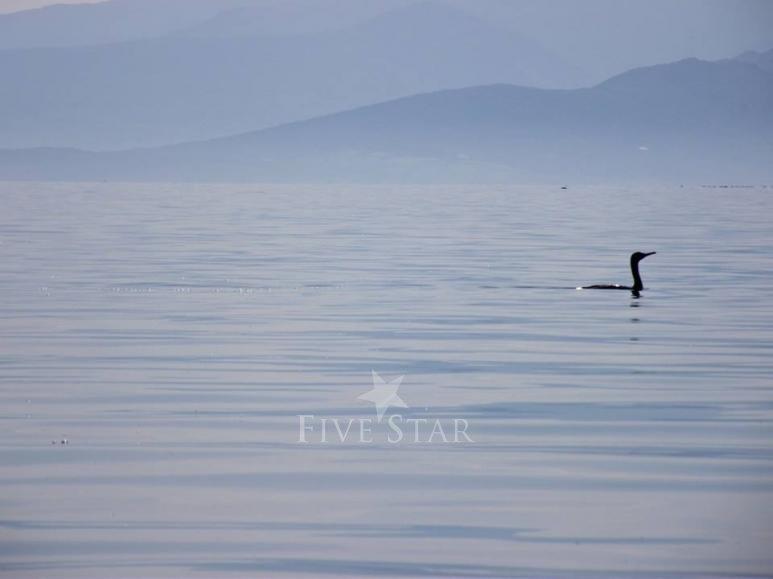 Mermaid Isle photo 45