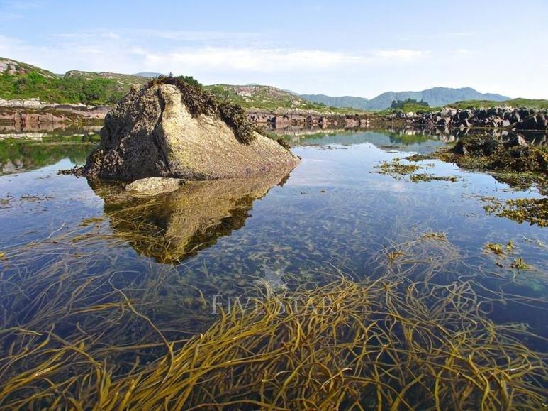 Mermaid Isle photo 18