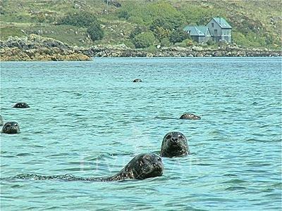 Mermaid Isle photo 49