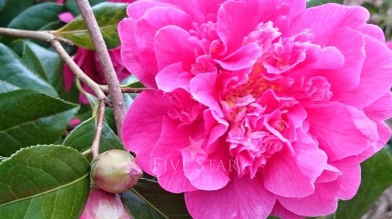 Kilmokea Gardens photo 25