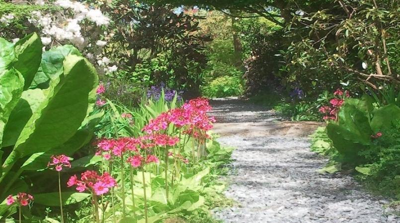 Kilmokea Gardens photo 26