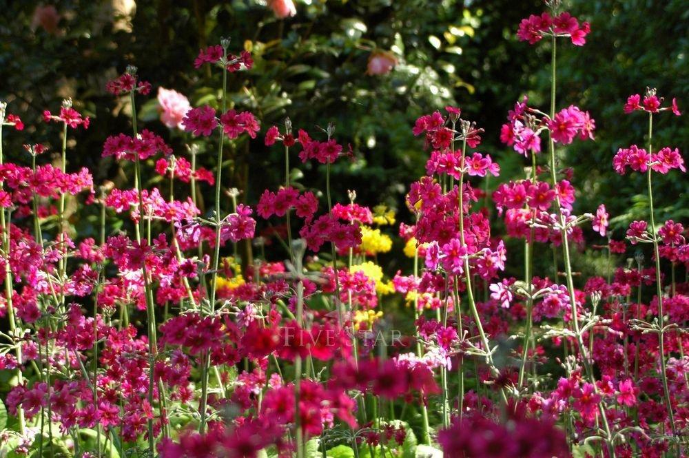 Kilmokea Gardens photo 9