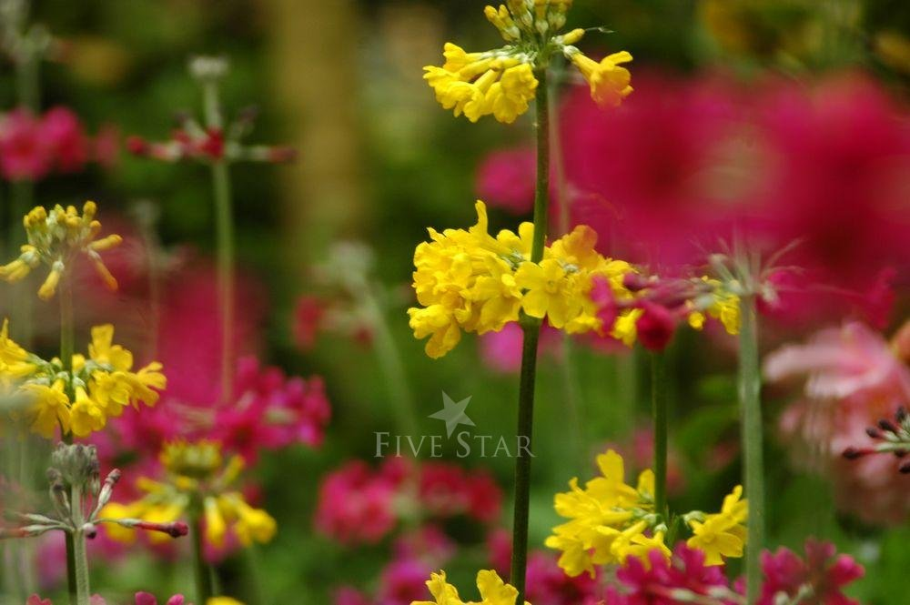 Kilmokea Gardens photo 6