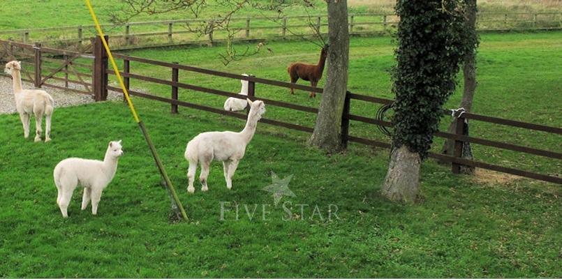Ash Tree Barn photo 3