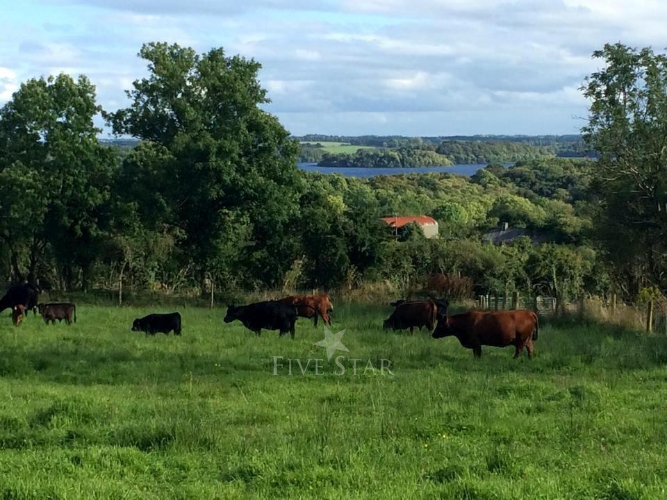 Drumanilra Farm Kitchen photo 17