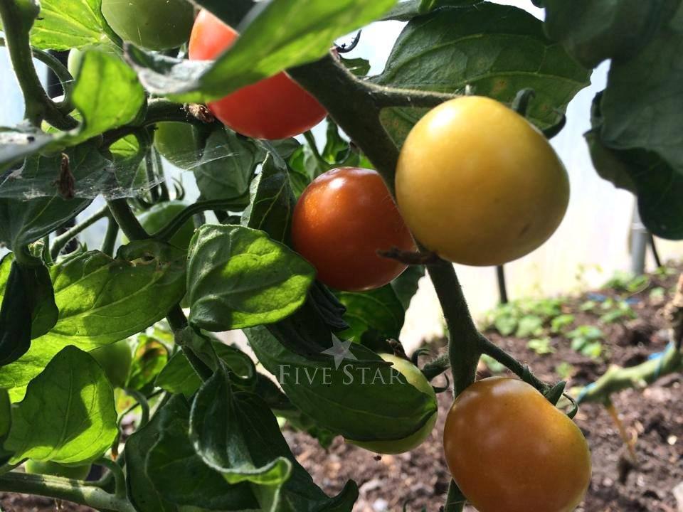 Drumanilra Farm Kitchen photo 27