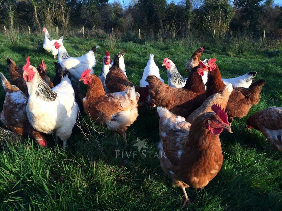Drumanilra Farm Kitchen photo 21