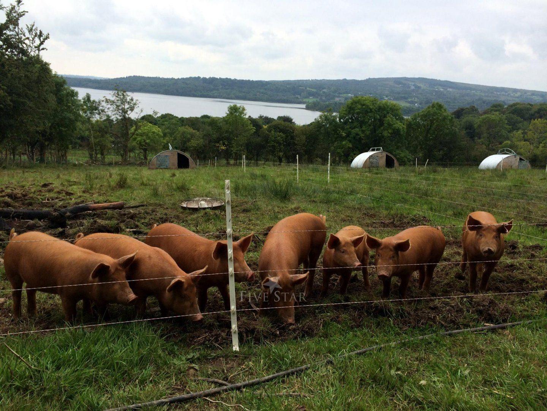 Drumanilra Farm Kitchen photo 2