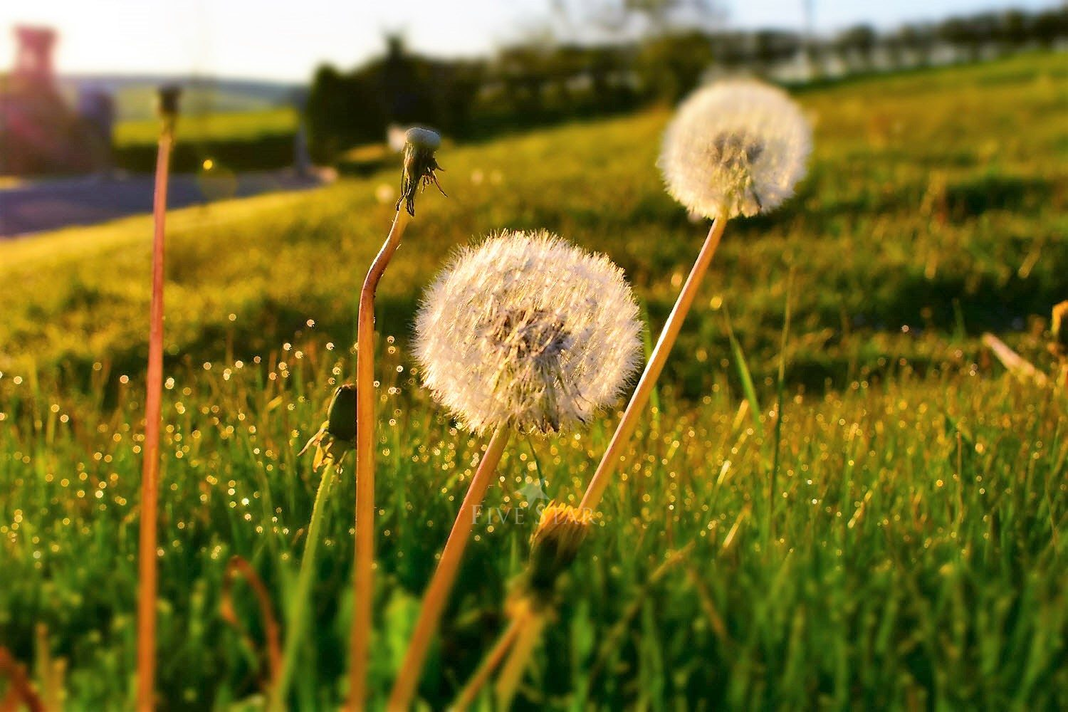 Wildflower Meadows By The Sea photo 46