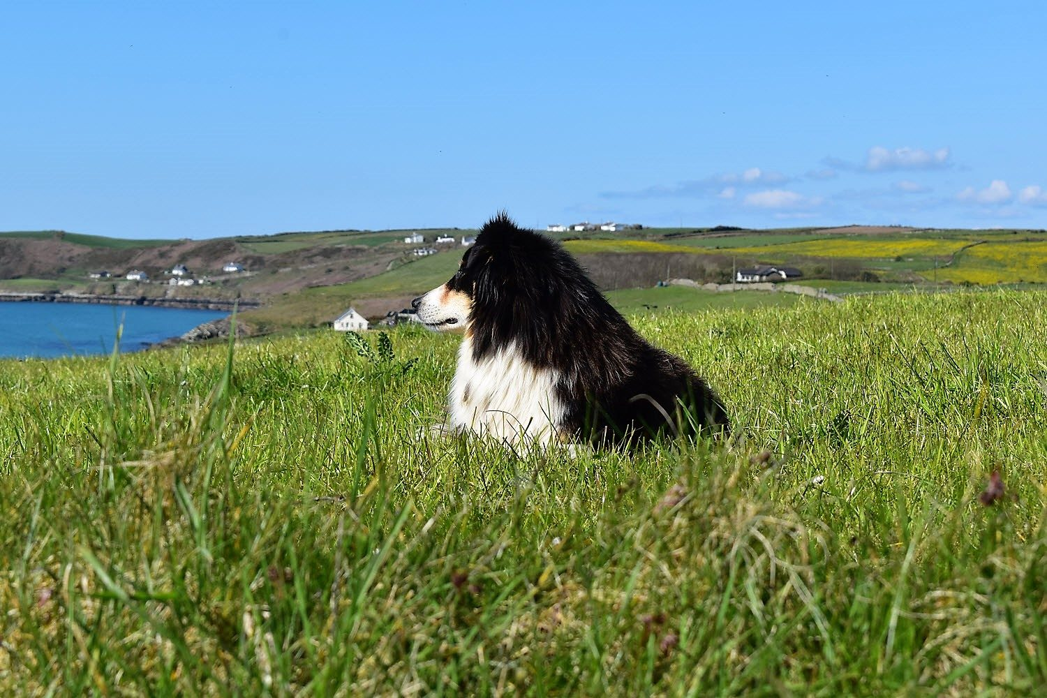 Wildflower Meadows By The Sea photo 53