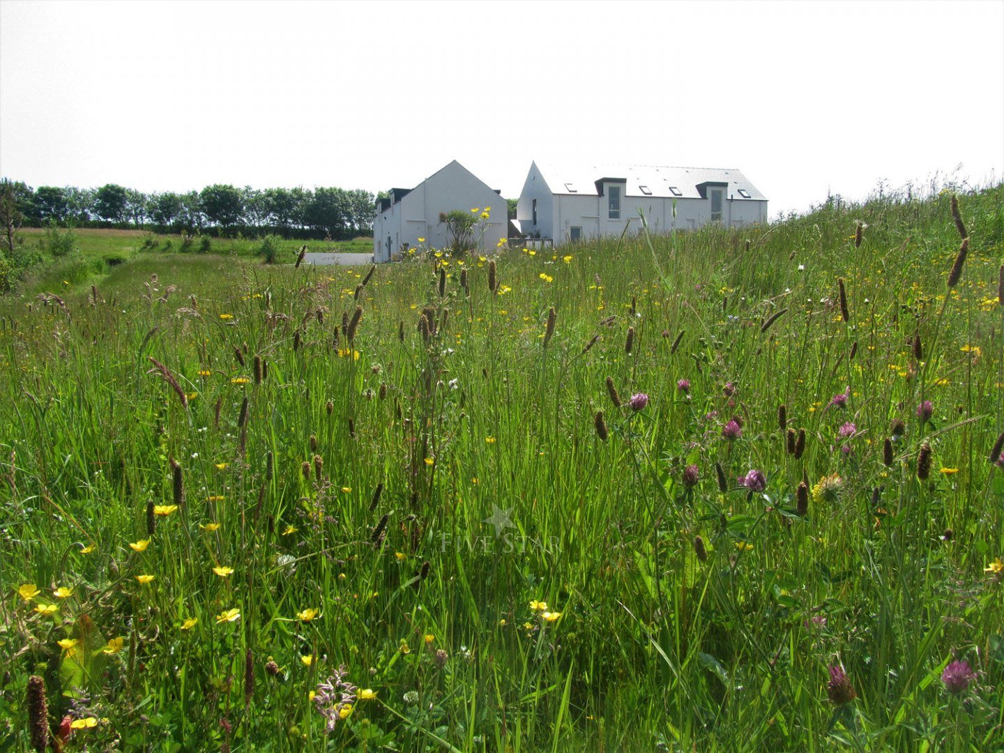 Wildflower Meadows By The Sea photo 4