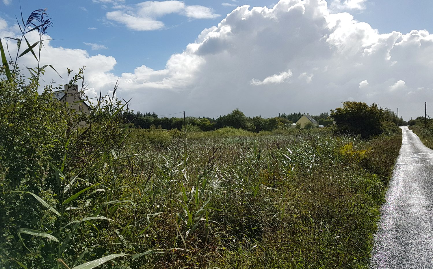 Barna Site For Sale photo 12